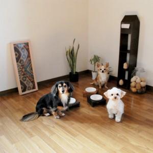 dog-mashidaigohan-sizelight